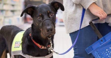 Epileptique, une femme s'est fait refuser à l'entrée d'un magasin Lidl à cause de son chien de service