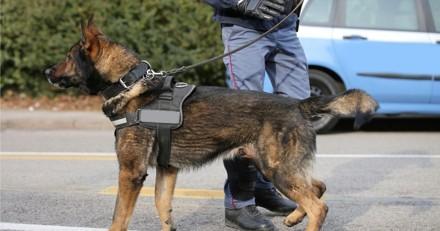 Ce chien-policier a fait une drôle de découverte dans un parc à Grenoble…