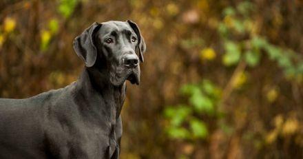 Ce chien de thérapie a une façon ingénieuse d'aider les personnes confinées en maison de retraite (Vidéo)