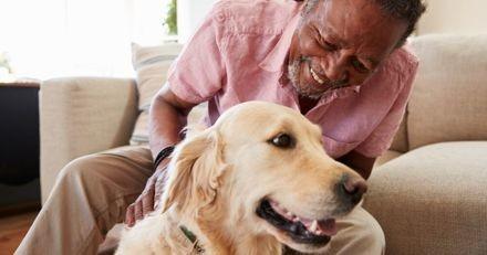 Un projet de permis de détention pour les animaux domestiques voit le jour en France