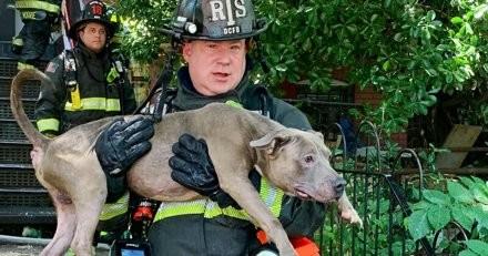Les pompiers sauvent 5 chiens lors d'un incendie : 5 minutes après, un pompier pousse un cri !