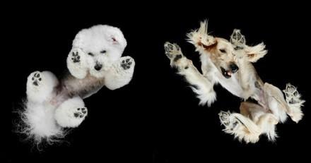 20 chiens photographiés… par en-dessous !
