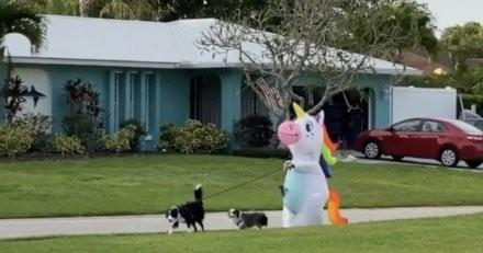 Les voisins regardent par la fenêtre : une licorne promène deux chiens en laisse, et c'est bel et bien réel (vidéo)