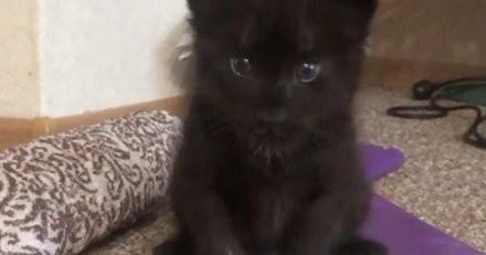 Elle ramène un chaton à la maison, mais après l'avoir reniflé son chien comprend que ce n'est pas un chat