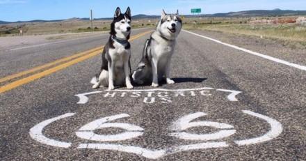 L'incroyable road-trip de deux Français et de leurs Husky aux Etats-Unis et au Canada ! (Photos)