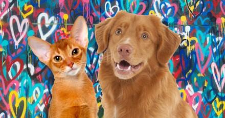 Saint-Valentin 2019 : 6 idées cadeaux à croquer pour votre chien et votre chat