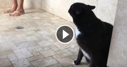 Ce chat qui prend sa douche avec sa maîtresse va vous surprendre