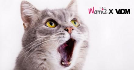 Découvrez les 4 histoires de chiens et de chats les plus drôles de la semaine #3