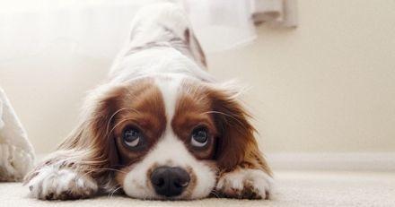 Après avoir dû euthanasier un chiot en bonne santé, ce vétérinaire fait une mise en garde sur l'adoption