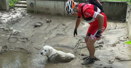 En pleine sortie en VTT, des cyclistes découvrent un chien complètement embourbé