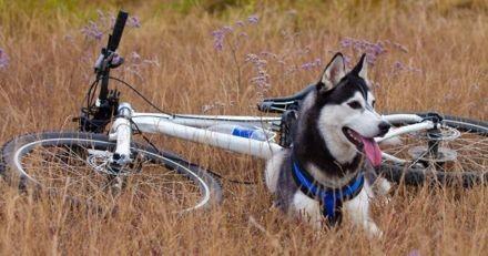 En Bretagne, une association organise un tour de vélo de 800km pour lever des fonds pour les refuges animaliers
