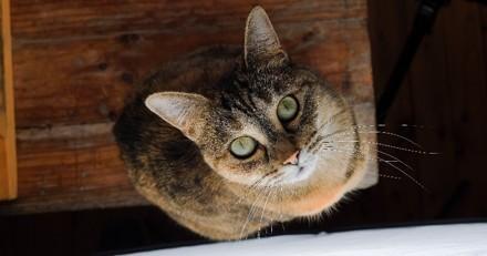 Pour se venger, une femme abandonne le chat d'un ami dans un refuge