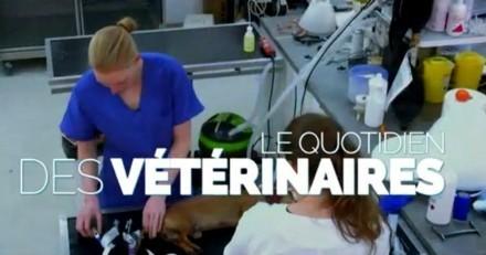 L'émission Vétérinaires, leur vie en direct : de retour sur TF1 dès le 9 avril !