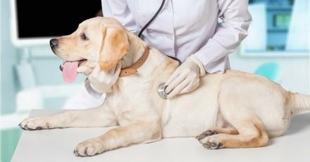 VetClic : le 1er site de prise de rendez-vous en ligne chez le vétérinaire