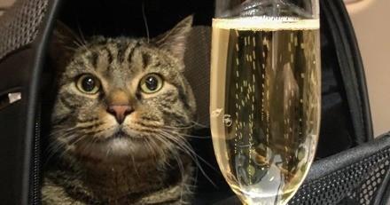 """Prêt à tout pour voyager avec son chat, il """"échange"""" le matou et perd des milliers d'euros"""