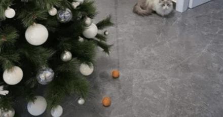 Son chat s'approche du sapin et part en courant grâce à une idée géniale de son humaine