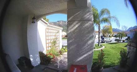 Elle dépose un objet sous son porche, quand il disparait la vidéo de surveillance désigne un coupable surprenant
