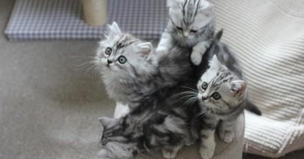 A voir absolument ! Une vie de chaton, le docu qui suit des boules de poils pendant leur première année