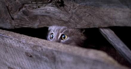 Grâce à La Vie Secrète des Chats, découvrez tout ce que font vos chats quand vous n'êtes pas là !