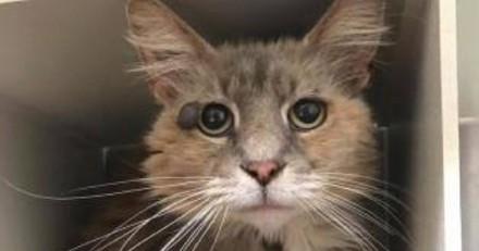 Cette chatte de 9 ans aux yeux tristes a tout fait pour trouver une nouvelle famille