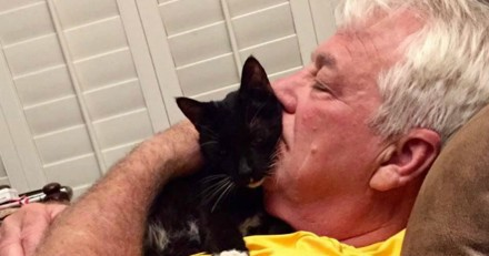Adopté à 15 ans, ce chat ne cesse de remercier ses nouveaux humains (Photos)
