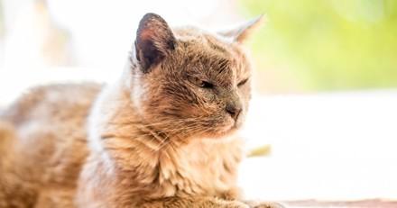 Son chien American Bully ne s'entend pas avec le chat de son conjoint : sa décision choque
