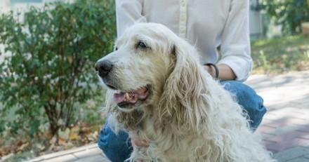 Arthrose du chien : Promenade, jeux… Que faut-il faire pour le garder en bonne santé ?