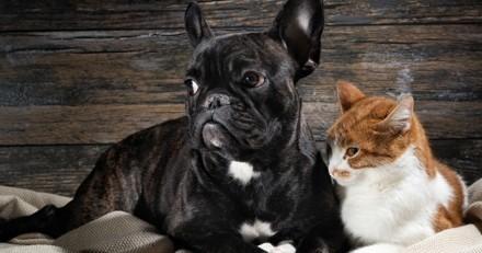 Les maladies du rein chez les chiens et chats âgés