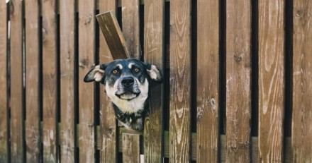 La fugue du chien : causes et solutions