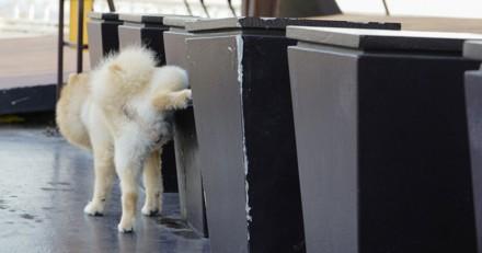 Mon chien fait pipi partout, que faire ?