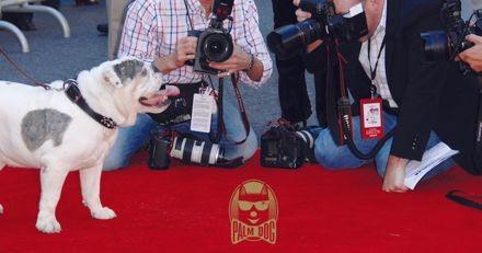 Festival de Cannes 2018 : la Palm Dog by Wamiz récompensera le chien le plus talentueux du cinéma