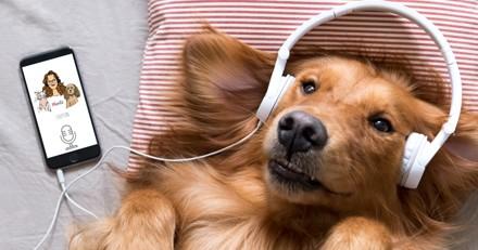 Griffon le Podcast : venez écouter le 1er podcast sur les animaux de compagnie ! Rire et émotion garantis !