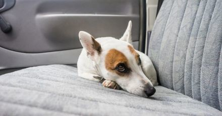 Mon chien est malade en voiture : que faire ?