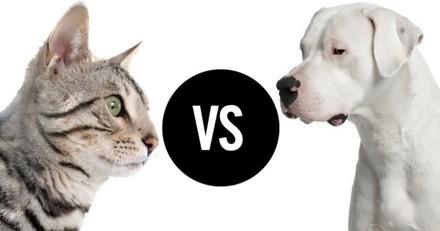 Figaro vs Jazz : qui sera le prochain locataire poilu de l'Elysée ?