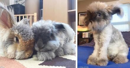 Wally le lapin peluche a une nouvelle amie... aussi mignonne que lui !