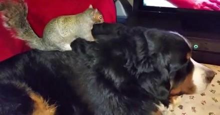 Ce chien et cet écureuil sont inséparables et c'est adorable (Vidéo du jour)