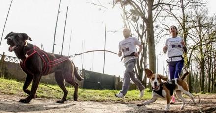 Courir avec son chien : un vétérinaire vous donne ses conseils pour pratiquer le cani-cross !