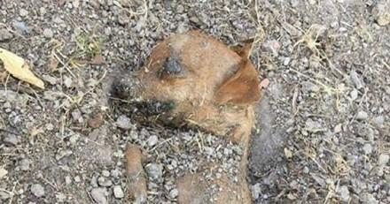 Une petite chienne a été retrouvée à moitié enterrée dans un parc à Marseille !