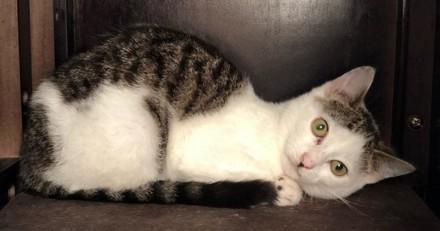 Elle sauve une chatte errante malade, quelques semaines plus tard personne n'en croit ses yeux