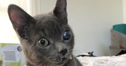 Elle aide un chat aux besoins spécifiques que personne ne voulait aider