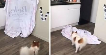 What The Fluff Challenge : vous aussi, faites un tour de magie pour votre chien !