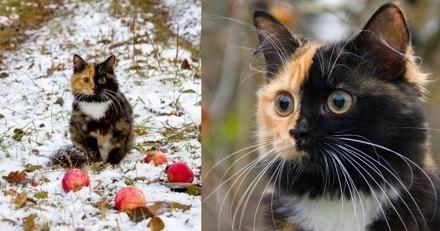 Voici Yana, l'adorable chatte chimère qui rêve de détrôner Venus sur Internet