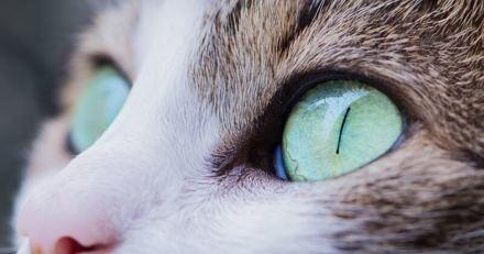 Pour la première fois un logiciel permet de voir comme son chat pendant quelques heures