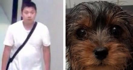 Propriétaire de 38 chiens, il jette un chiot vivant à la poubelle