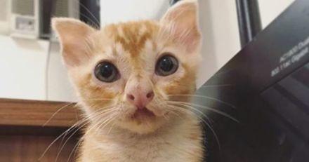 Ce chaton errant au visage hors du commun fait des câlins à absolument tout le monde