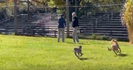 Le guépard se met à courir après un chien : tout le monde retient son souffle, ce qui se passe est extraordinaire