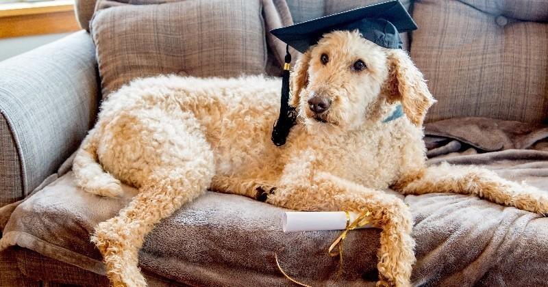 Comment apprendre des tours à son chien ?