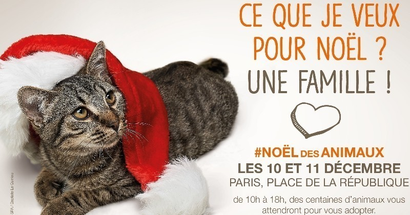 400 chats et chiens à adopter ce weekend à Paris dans un refuge éphémère de la SPA