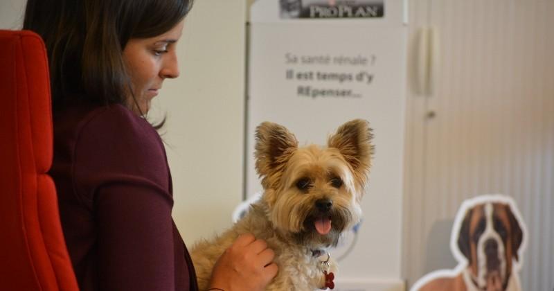 Pet Day : Purina célèbre les chiens au travail et montre leur pouvoir fédérateur