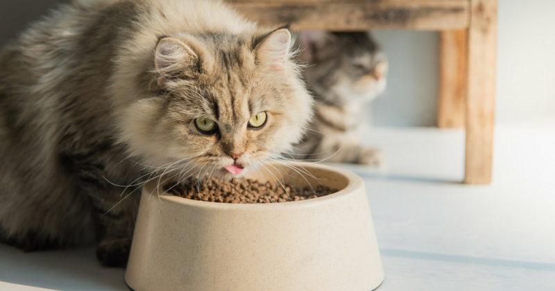 Comment choisir l'alimentation de son chat ?